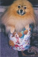 Furball in a tin '02