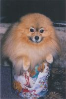 Furball in a tin II '02